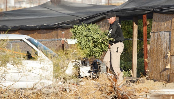 TWO ARRESTED AT ILLEGAL MARIJUANA GROW IN NORTH PALM SPRINGS